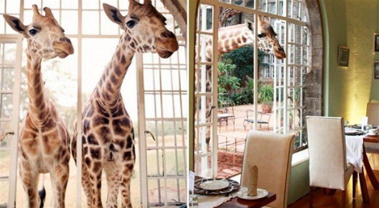 wanderlust_tips_enjoy-breakfast-with giraffes-in-Kenya4 (7)