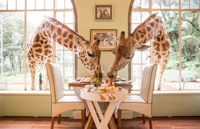 wanderlust_tips_enjoy-breakfast-with giraffes-in-Kenya4 (8)