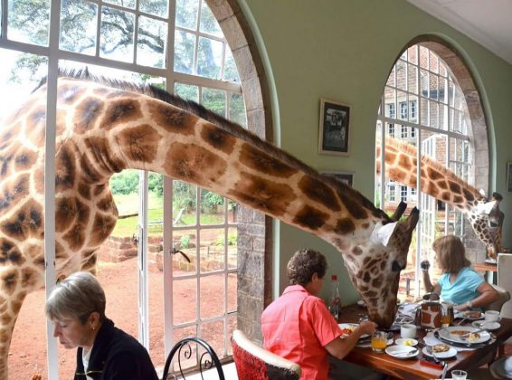 wanderlust_tips_enjoy-breakfast-with giraffes-in-Kenya4 (9)