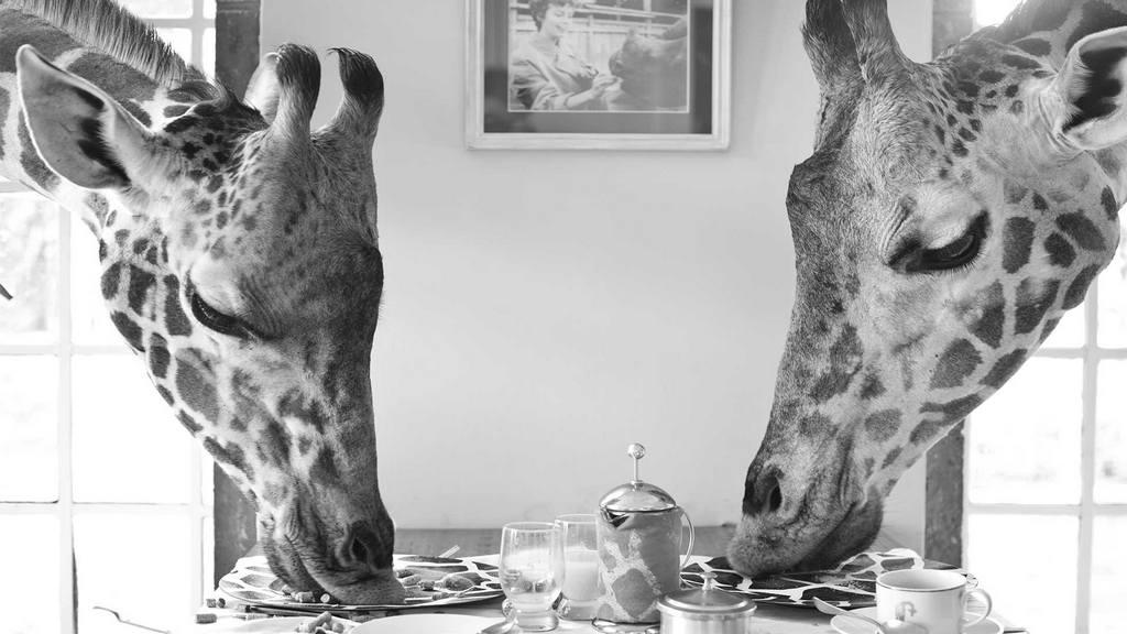 wanderlust_tips_enjoy-breakfust-with giraffe-in-Kenya2