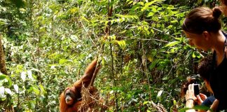 Gunung Leuser National Park, Indonesia