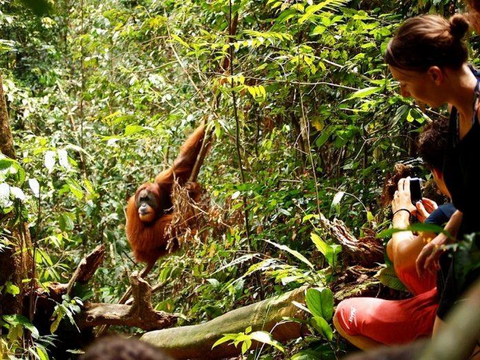 Gunung Leuser National Park, Indonesia