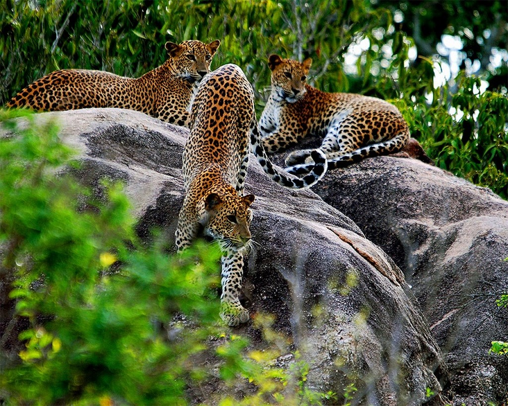 Yala National Park, Sri Lanka