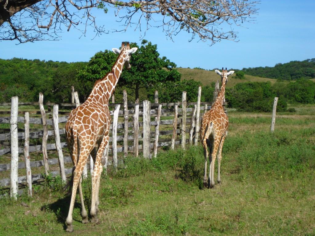 Calauit Safari Park, Philippines