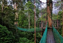 Danum Valley Conservation Area, Sabah, Malaysia 1