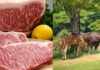 why kobe beef is so expensive