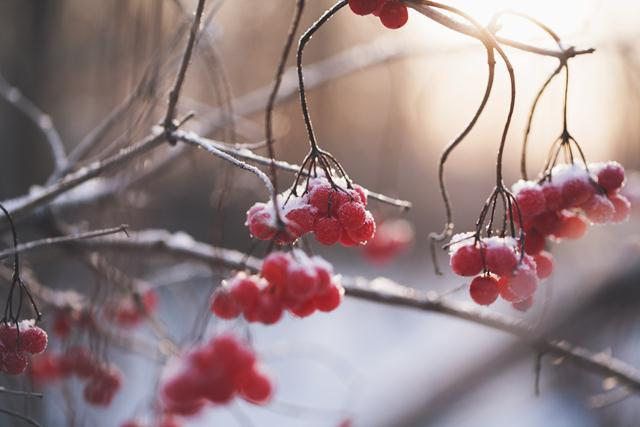 fruit-trees-enjoy-warm-winter-in-western