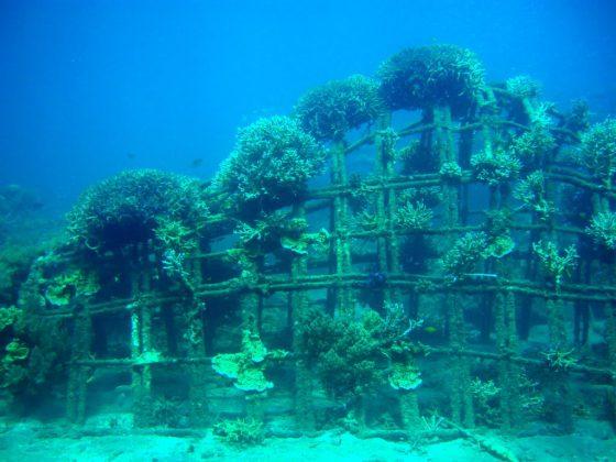 pemuteran-bali-island-new-land-on-the-bali-island-bali-attractions-20