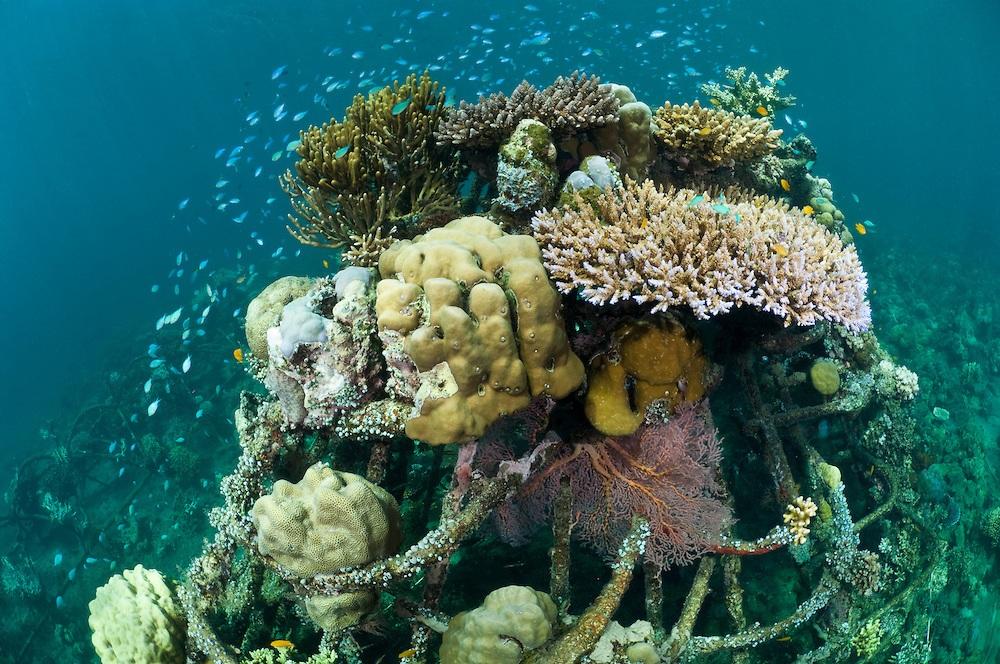 pemuteran-biorock-the-new-land-on-the-bali-island1