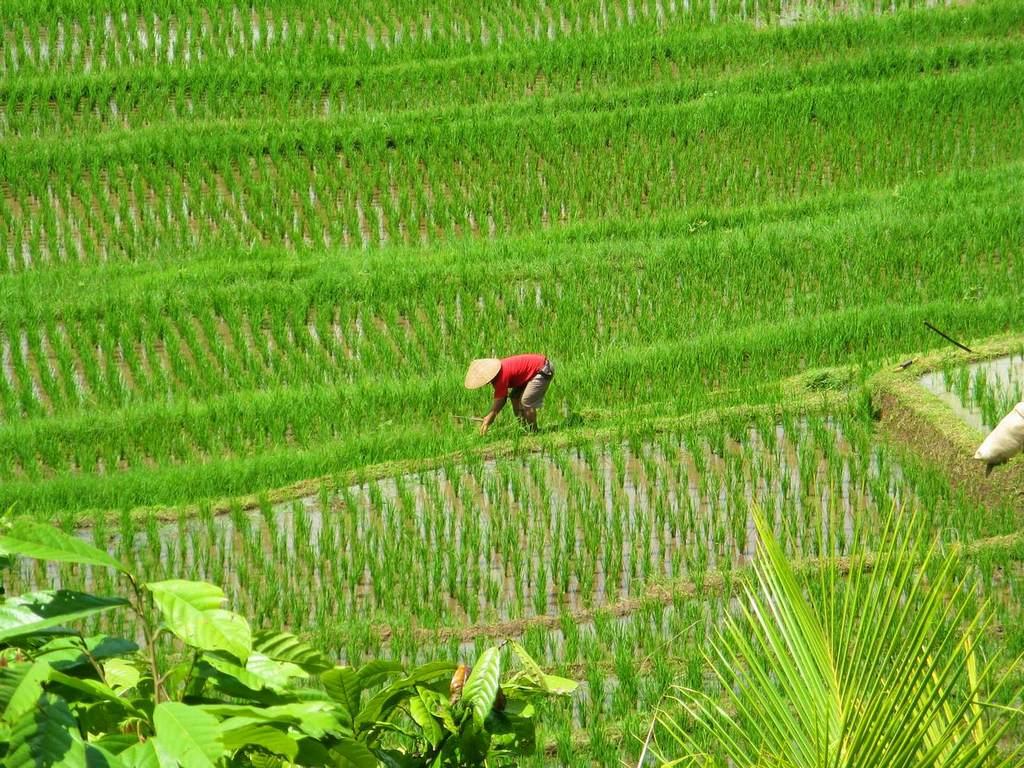 pemuteran-moving-conditions-taman-sari-bali-the-new-land-on-the-bali-island