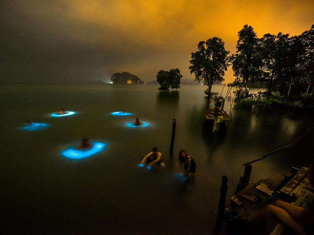 plankton krabi thailand