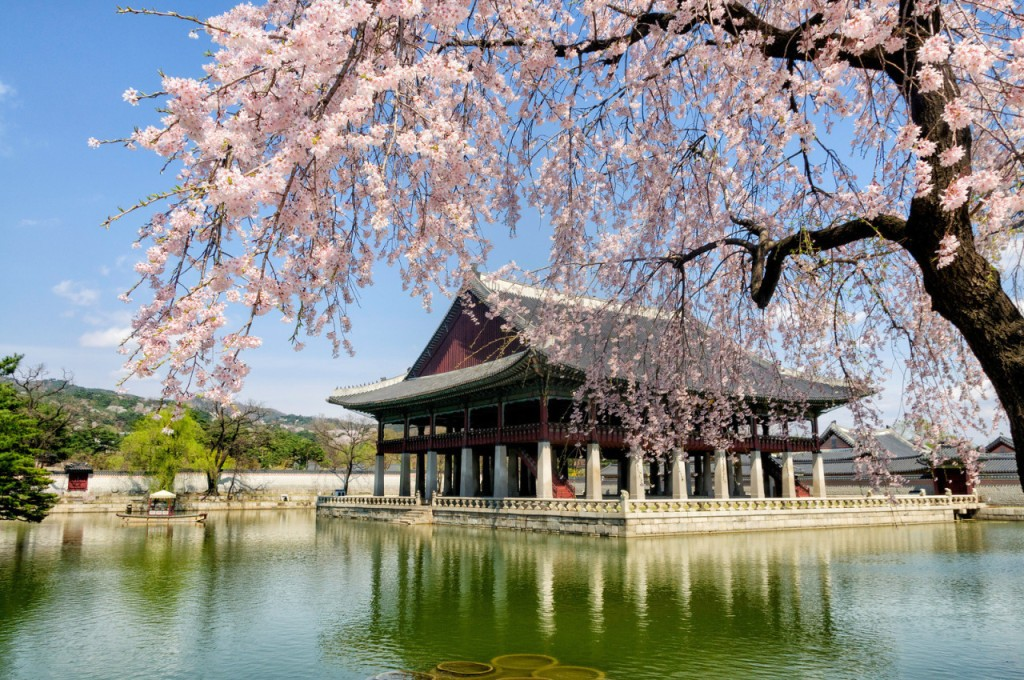 gyeongbokgung-palace-location-for-viewing-cherry-blossom-seoul-korea1