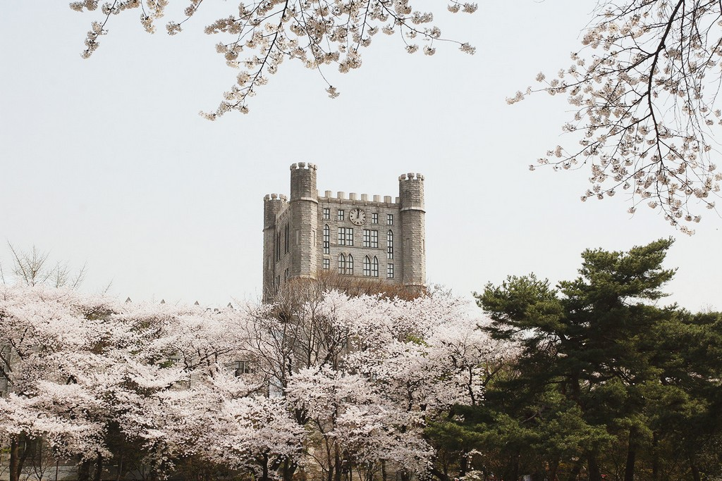 kyung-hee-university-location-for-viewing-cherry-blossom-seoul-korea3