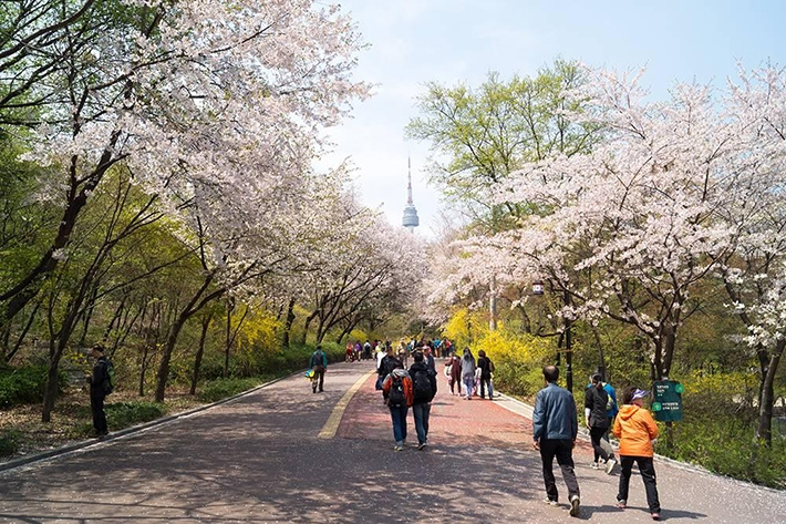 namsan-seoul-tower-location-for-viewing-cherry-blossom-seoul-korea2