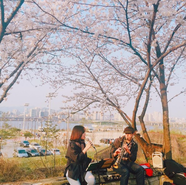 yeouido-park-location-for-viewing-cherry-blossom-seoul-korea2