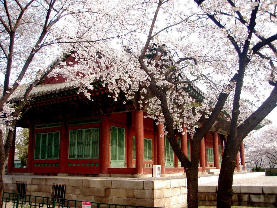 Blossoms at the Samcheongdong public library.
