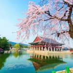 Seoul cherry blossom — Top 9 best place to see cherry blossoms in Seoul