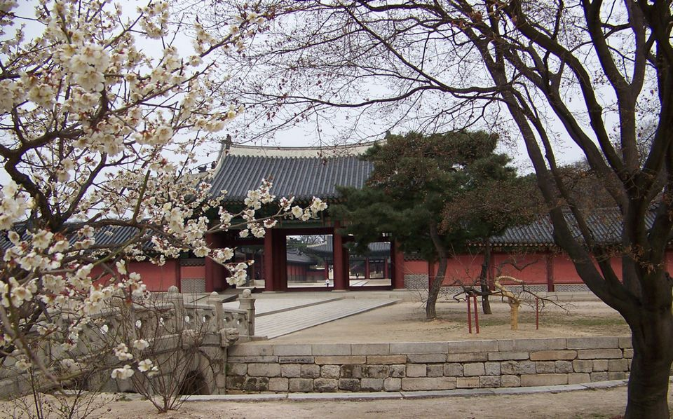 Changgyeonggung Palace cherry blossoms 3