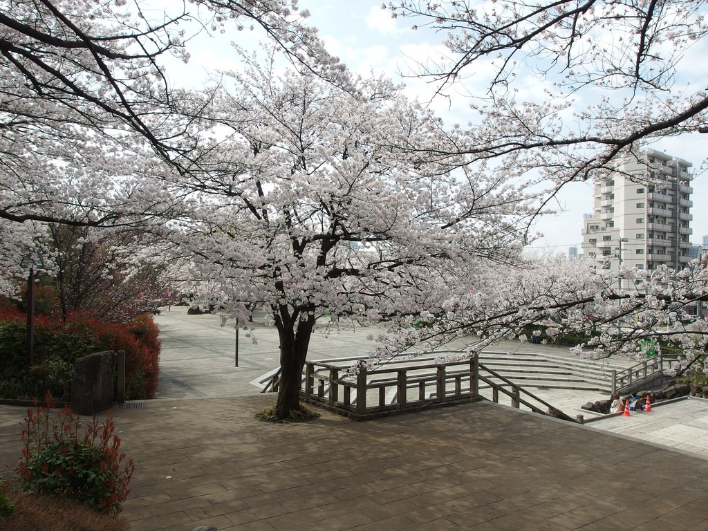 Asukayama park-Best Places to View Cherry Blossoms in Tokyo