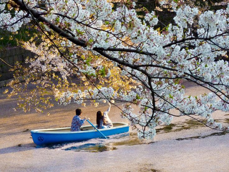 Canal Chidori-ga-Fuchi-Best Places to View Cherry Blossoms in Tokyo