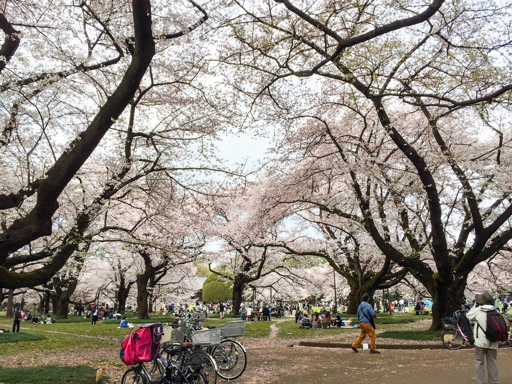 Koganei Park-Best Places to View Cherry Blossoms in Tokyo