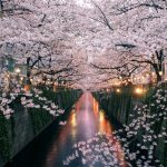 14 best places to view cherry blossoms in Tokyo