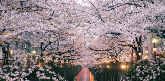 Meguro River-Naka Meguro-Best Places to View Cherry Blossoms in Tokyo1