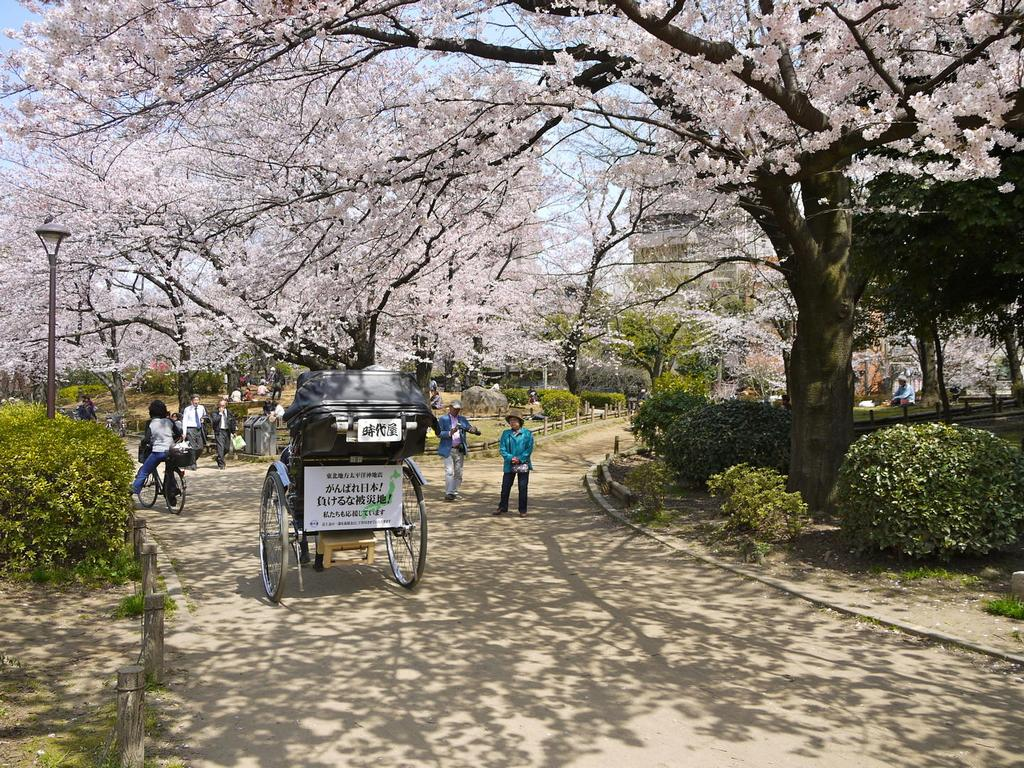 Sumida-Park-Best Places to View Cherry Blossoms in Tokyo2