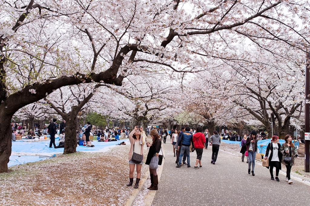Yoyogi Park-Best Places to View Cherry Blossoms in Tokyo1