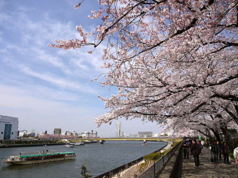 Sumida-Park-Best Places to View Cherry Blossoms in Tokyo3