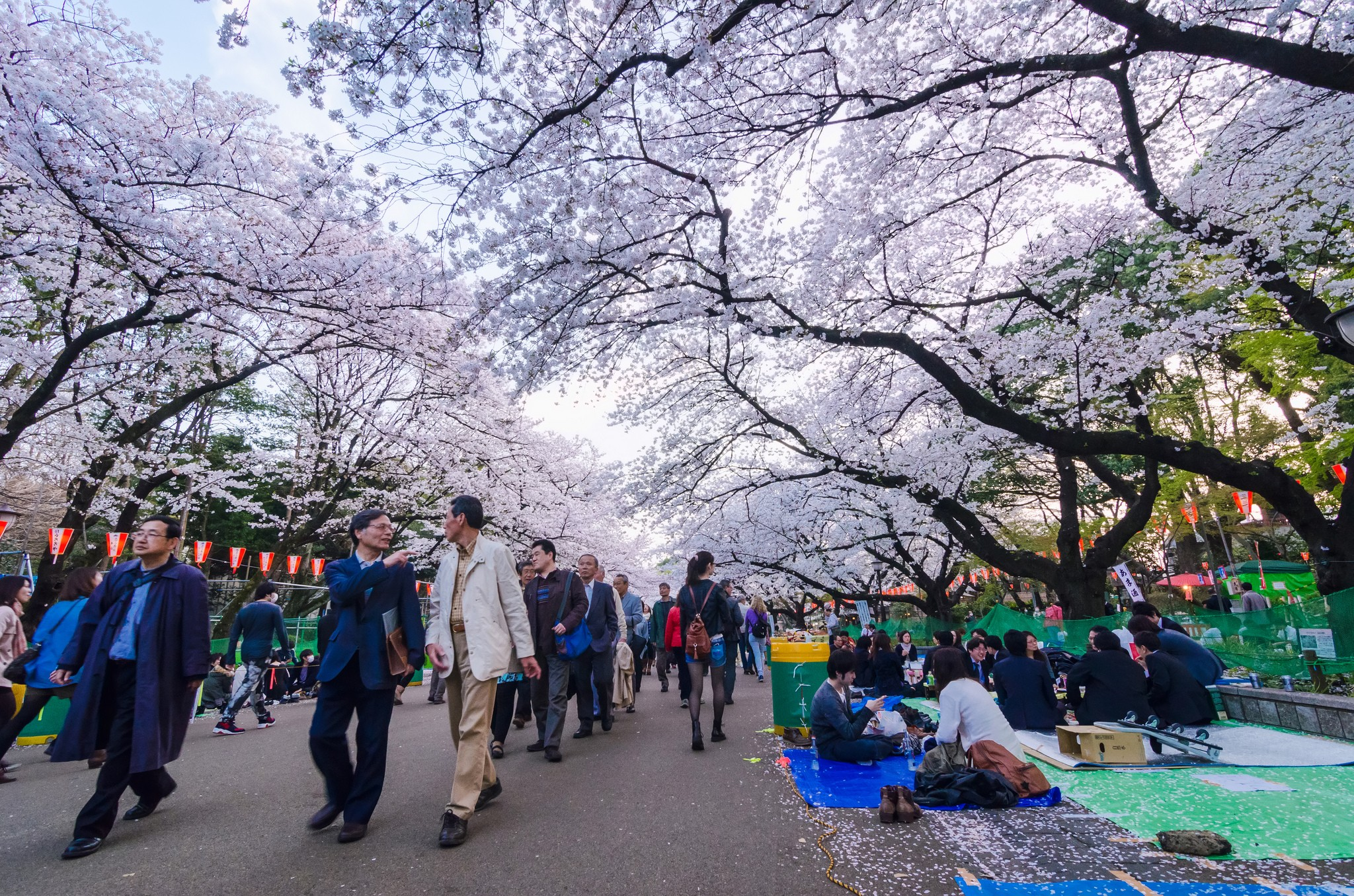 Uneo park-Best Places to View Cherry Blossoms in Tokyo3