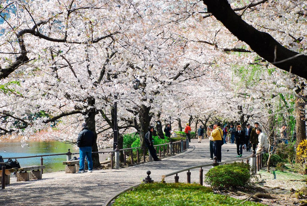 Uneo park-Best Places to View Cherry Blossoms in Tokyo4