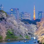 14 best places to see cherry blossoms in Tokyo