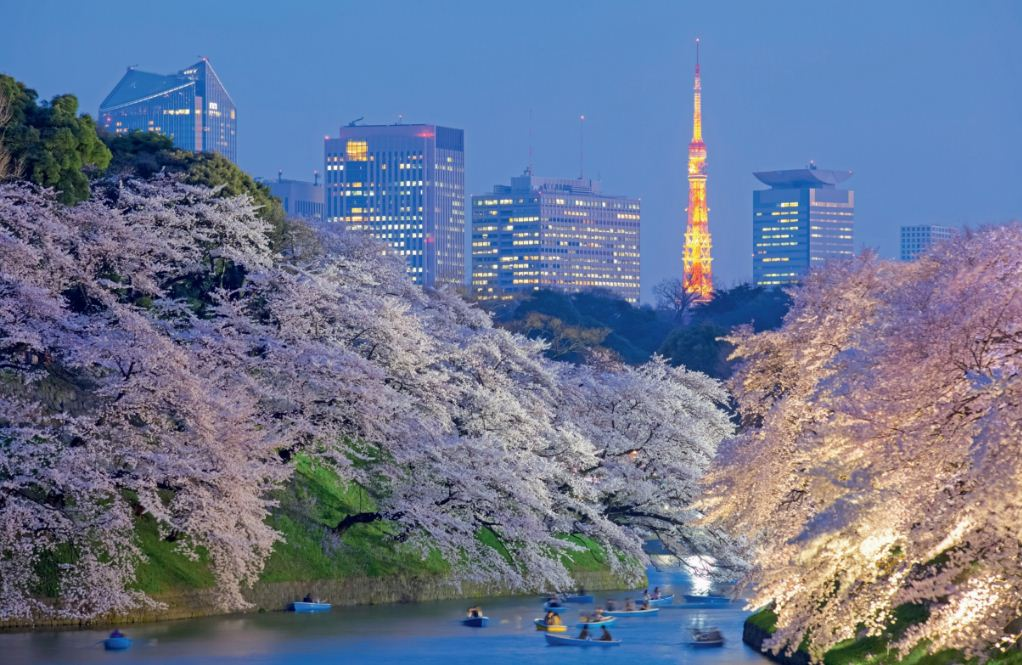 best places to see cherry blossoms in tokyo