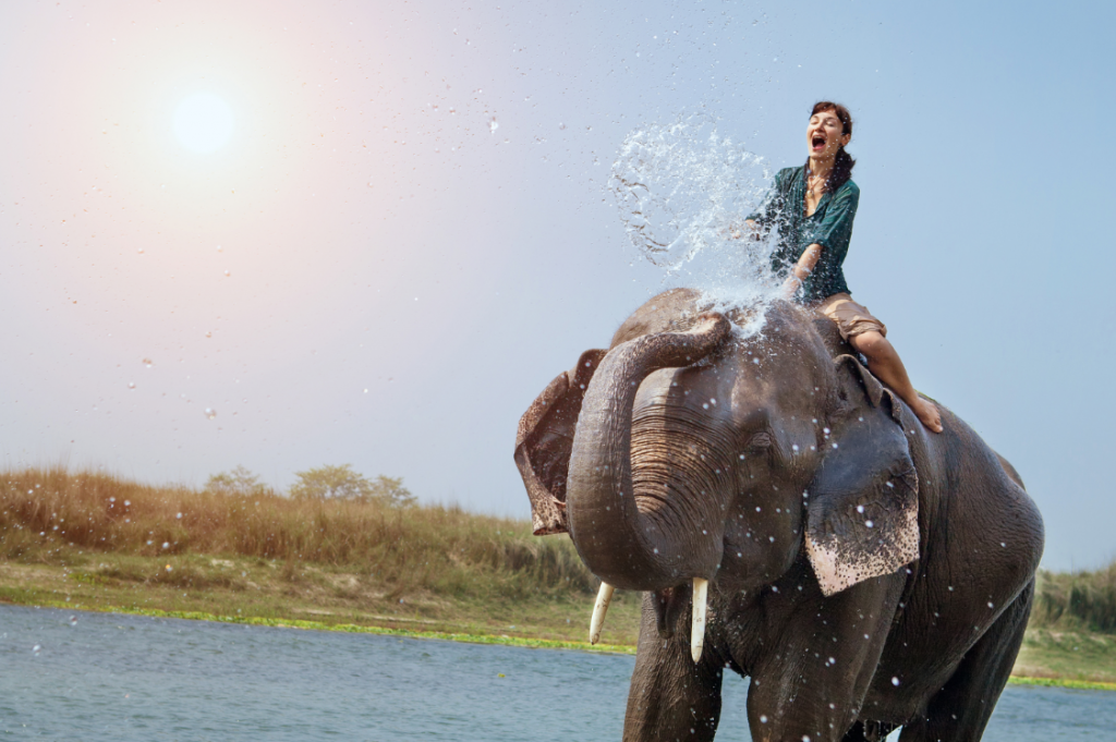 chiang mai elephant riding . Image of what to do in Chiang Mai in 3 days blog.