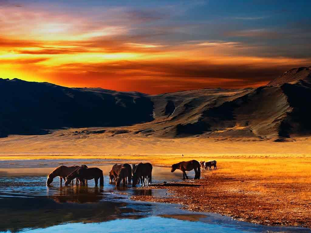 Horse Riding-best experiences-in Mongolia1