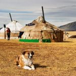 10+ photos show the peaceful of Mongolian life in the steppes