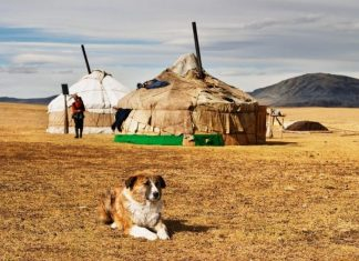 Mongolian tent-best experiences-in Mongolia2