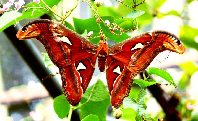 butterfly garden nong nooch tropical botanical garden pattaya thailand 2