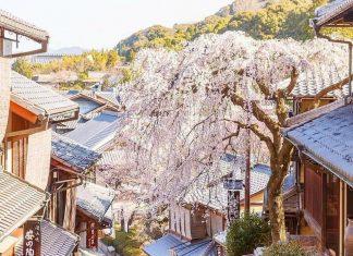 japan cheap travel tips 3