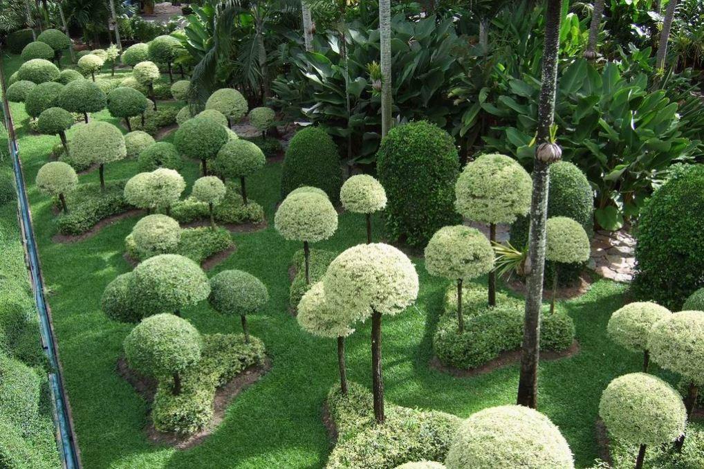 nong nooch tropical botanical garden pattaya thailand 104
