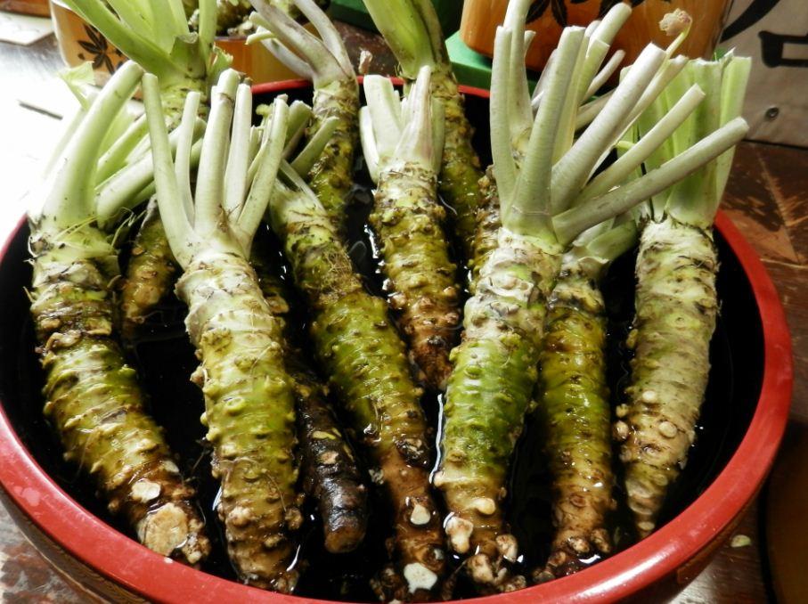 wasabi stems