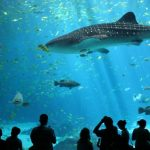 Explore S.E.A. Aquarium Singapore — One of the best places you must visit in Singapore