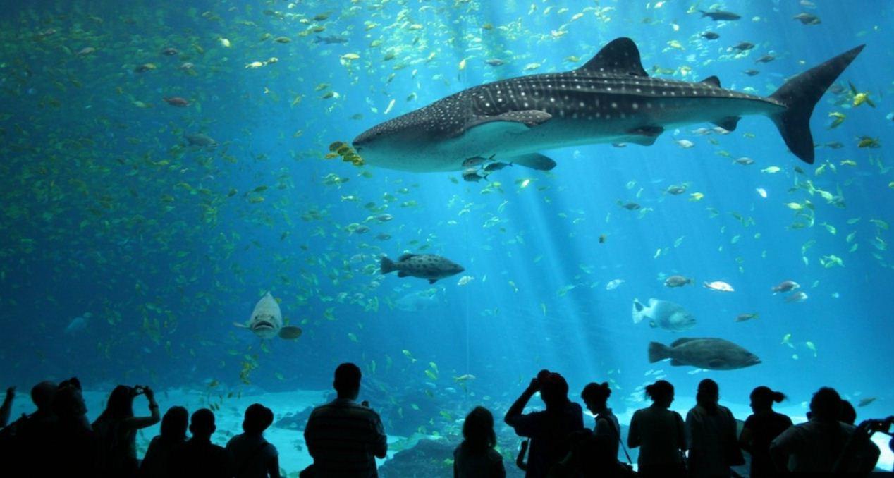 1 sea aquarium singapore review (2)