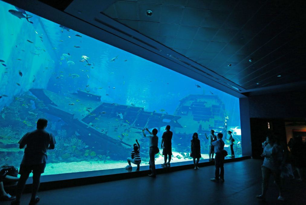 11 sea aquarium singapore review (2)