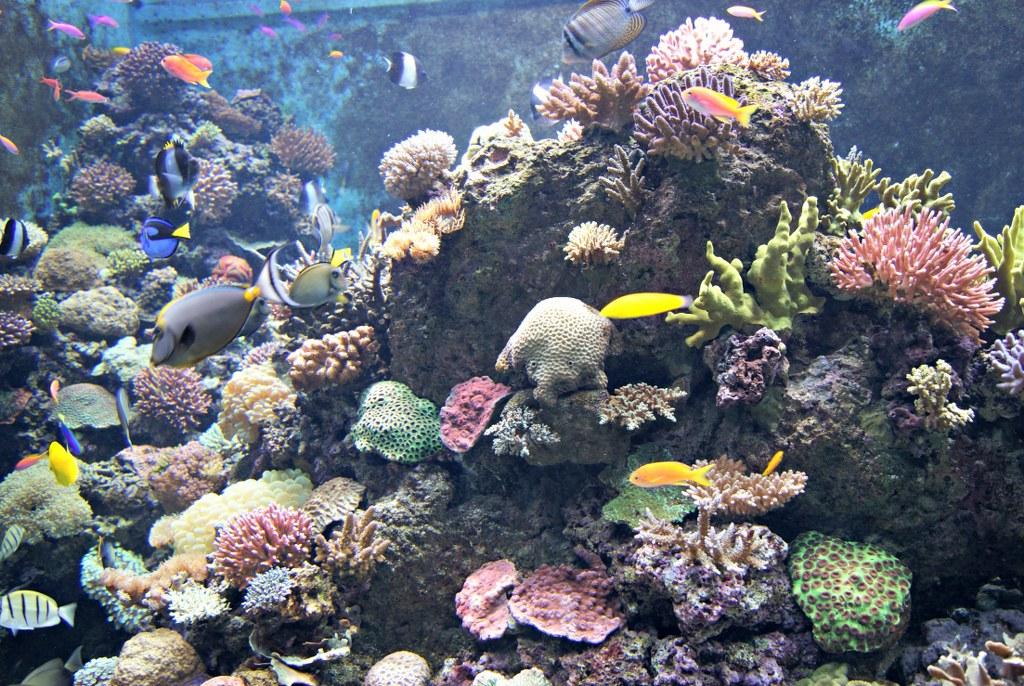 sea aquarium singapore