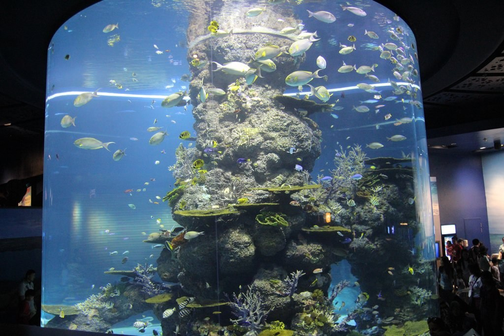 behold the wonderful ocean world at sea aquarium singapore