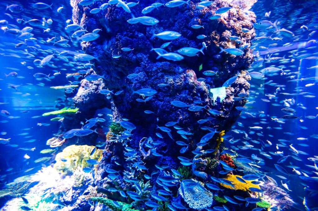 sea aquarium singapore review (1)