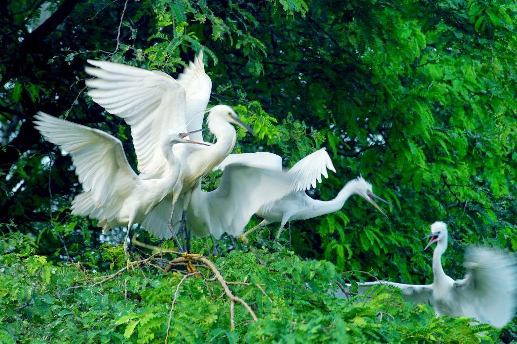 vam ho bird garden 2