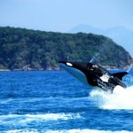 Fascinating with 'Dolphin riding' at Hon Tam Island, Vietnam